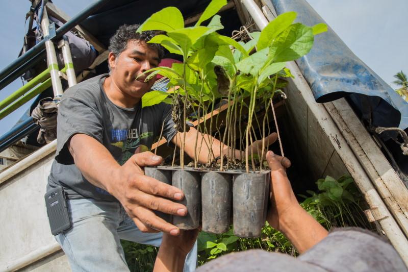 Mann mit Pflanzen in der Hand